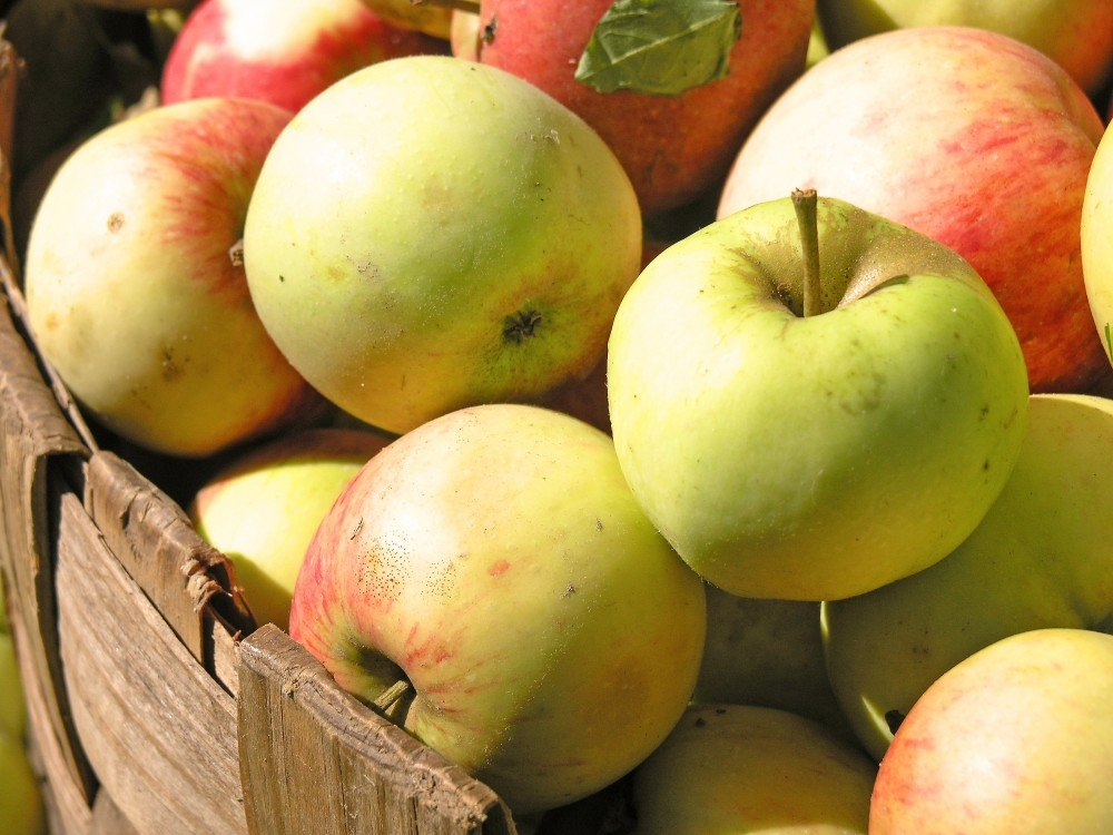 Apple Cider Festival and Craft Show