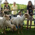 Goats at the Shawnee Celtic Festival